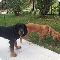 Adopt A Pet :: Clover & Nutmeg 18mo - Mentor, OH