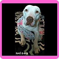 Adopt A Pet :: Pearl-NEEDS FOSTER! - Des Moines, IA
