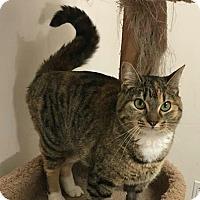Adopt A Pet :: Muffin - Wasilla, AK
