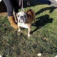 Adopt A Pet :: Twinkie - Reno, NV