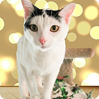 Adopt A Pet :: Thor - McDonough, GA