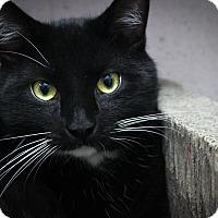 Adopt A Pet :: Romeo - New Kensington, PA