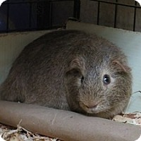 Adopt A Pet :: Koonda - Quilcene, WA