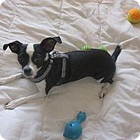 Adopt A Pet :: Diamond-Only $55 adoption fee! - Litchfield Park, AZ