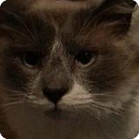 Adopt A Pet :: Sven - Ennis, TX