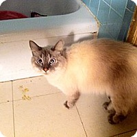 Adopt A Pet :: Gatsby - Cocoa, FL