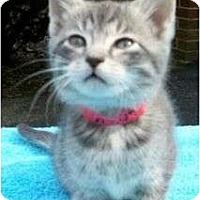 Adopt A Pet :: Cecile (Pepper) - Reston, VA