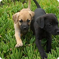 Adopt A Pet :: Sally & Sadie - San Diego, CA