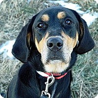 Adopt A Pet :: Brandy - Cheyenne, WY