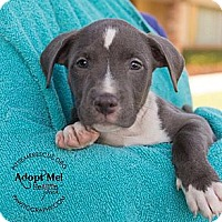 Adopt A Pet :: Nala - Gilbert, AZ