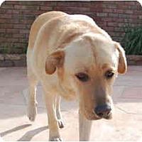 Adopt A Pet :: Biscuit - Courtesy Post - Scottsdale, AZ