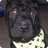 Adopt A Pet :: Remi - Barnegat Light, NJ