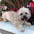 Adopt A Pet :: TAMI
