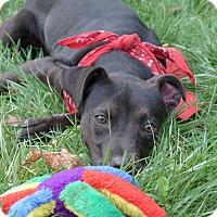 Adopt A Pet :: Felicity - Mocksville, NC