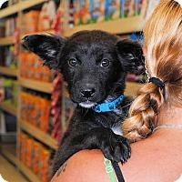 Adopt A Pet :: Orlando - Shelter Island, NY