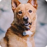Adopt A Pet :: Keegan - Portland, OR