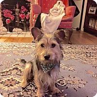 Adopt A Pet :: Shaggy - Alpharetta, GA