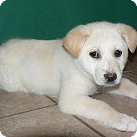 Adopt A Pet :: Codie - New Oxford, PA
