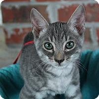 Adopt A Pet :: Blue - Ocean Springs, MS