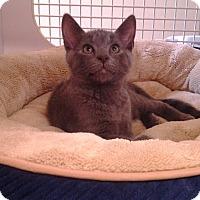 Adopt A Pet :: Foggy - Richmond, VA