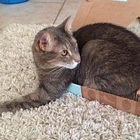 Adopt A Pet :: Maddie The Cuddle Bug - Phoenix, AZ