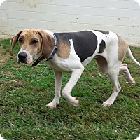Hound (Unknown Type) Mix Dog for adoption in Shinnston, West Virginia - Delilah