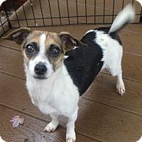 Adopt A Pet :: Nanny - Salem, OR