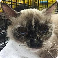 Adopt A Pet :: Bunny - Columbia, SC