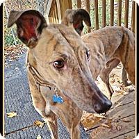 Adopt A Pet :: Paulie - Geneva, OH