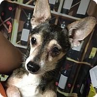 Adopt A Pet :: Logan - Davie, FL