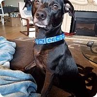 Adopt A Pet :: Mynx - Salem, OR