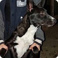 Adopt A Pet :: Tita ---- FOSTER home NEEDED - cupertino, CA