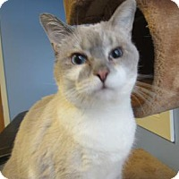 Adopt A Pet :: Aspen - Northfield, MN