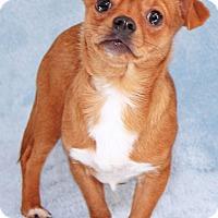 Adopt A Pet :: Challenger - Encinitas, CA