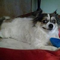 Adopt A Pet :: Monchichi - Tucson, AZ