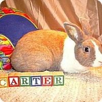 Adopt A Pet :: Carter - Newport, DE