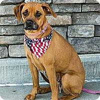 Adopt A Pet :: Peanut - Apex, NC