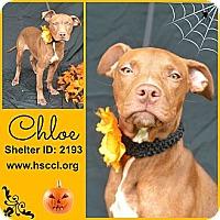 Adopt A Pet :: Chloe - Plano, TX