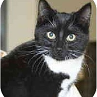 Adopt A Pet :: Mollie - Milwaukee, WI