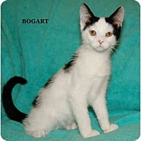 Adopt A Pet :: Bogart - Catasauqua, PA