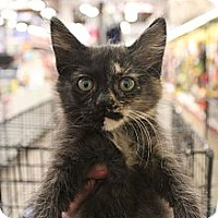 Adopt A Pet :: kitty6 - Santa Monica, CA