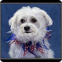 Adopt A Pet :: Trinity - Fort Braff, CA