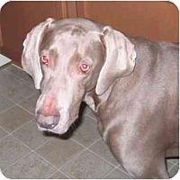 Adopt A Pet :: Jesse - Eustis, FL