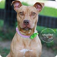 Adopt A Pet :: Brooklyn - Fincastle, VA