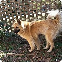 Adopt A Pet :: Bill Clinton - Roswell, GA