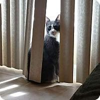 Adopt A Pet :: Cyrus - Ortonville, MI