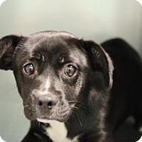 Adopt A Pet :: Okra - Smyrna, GA