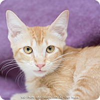 Adopt A Pet :: Dorie - Fountain Hills, AZ