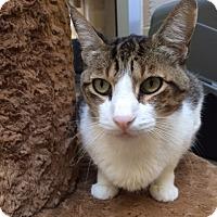 Adopt A Pet :: KC - Chula Vista, CA