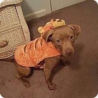 Adopt A Pet :: PUDDIN - Charlotte, NC